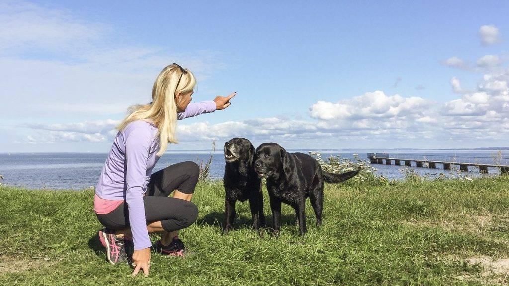 Bra mot din hunds stela leder och muskler