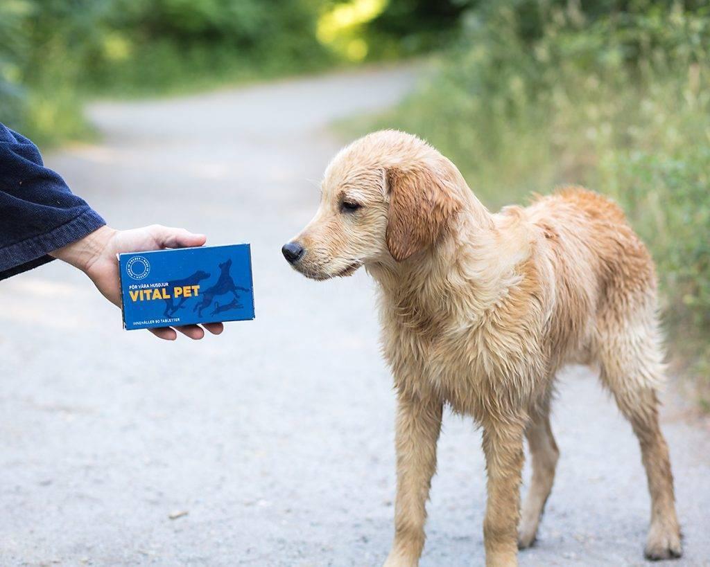 VITAL PET är ett naturligt fodertillskott
